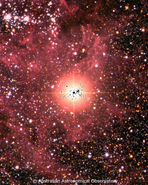 supernova 1987a discovery - 480×600