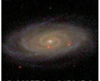 Bulgeless galaxies with growing black holes