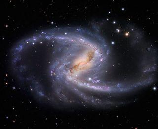 Feeding black holes through galactic bars
