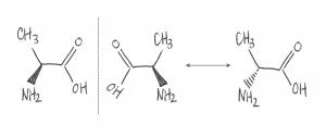 顯示在左邊的兩種形式的丙氨酸是手性配對
