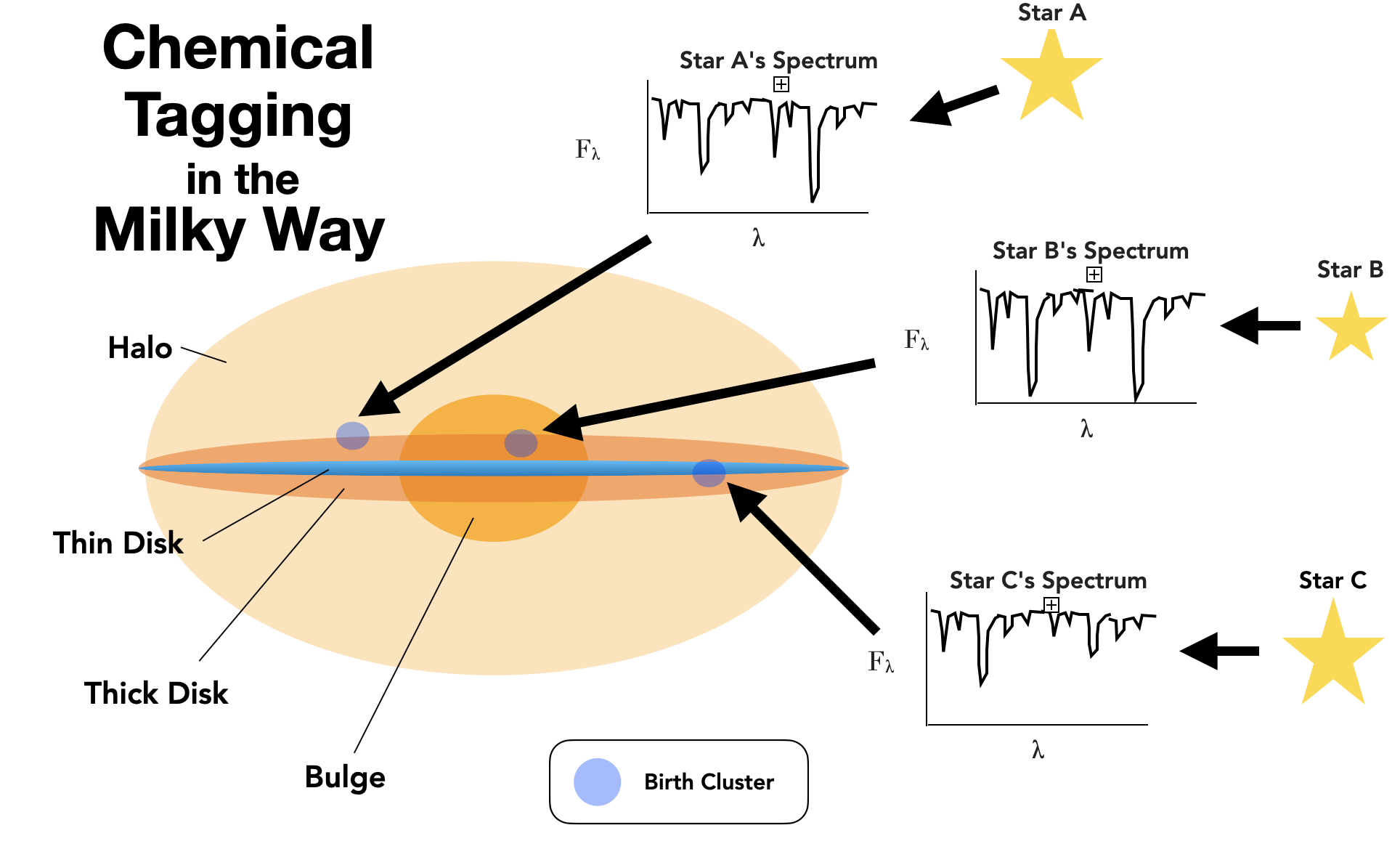 """A diagram of chemical tagging.  The text """"Chemical Tagging in the Milky Way"""" in bold text lies at the top left corner of the image.  In the center of the image is a large toy Milky Way, situated edge-on to the viewer.  This Milky Way is composed of a thin disk (in blue), a thick disk (in translucent dark orange), a central bulge (opaque orange), and a hazy light orange halo surrounding the entire structure.  There are three pale blue, spherical """"birth clusters"""" situated across the Milky Way disk.  There are three stars to the right of the image with arrows leading to spectra.  These spectra then have their own arrows pointing to the three birth clusters in the Milky Way diagram."""