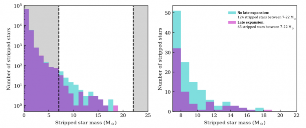 Number of stripped stars for binned star masses from 0 to 19 solar masses. Where there is no late expansion, there are 124 stripped stars between 7 and 22 solar masses. Where there is late expansion, this number drops to 63.